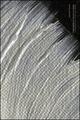 Variazioni in bianco e nero. Ediz. italiana e inglese
